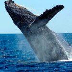 ballenas en juanchaco