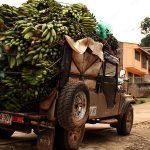 cali-coffee-farm-tour