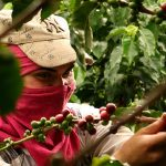 colombia-coffee-tour